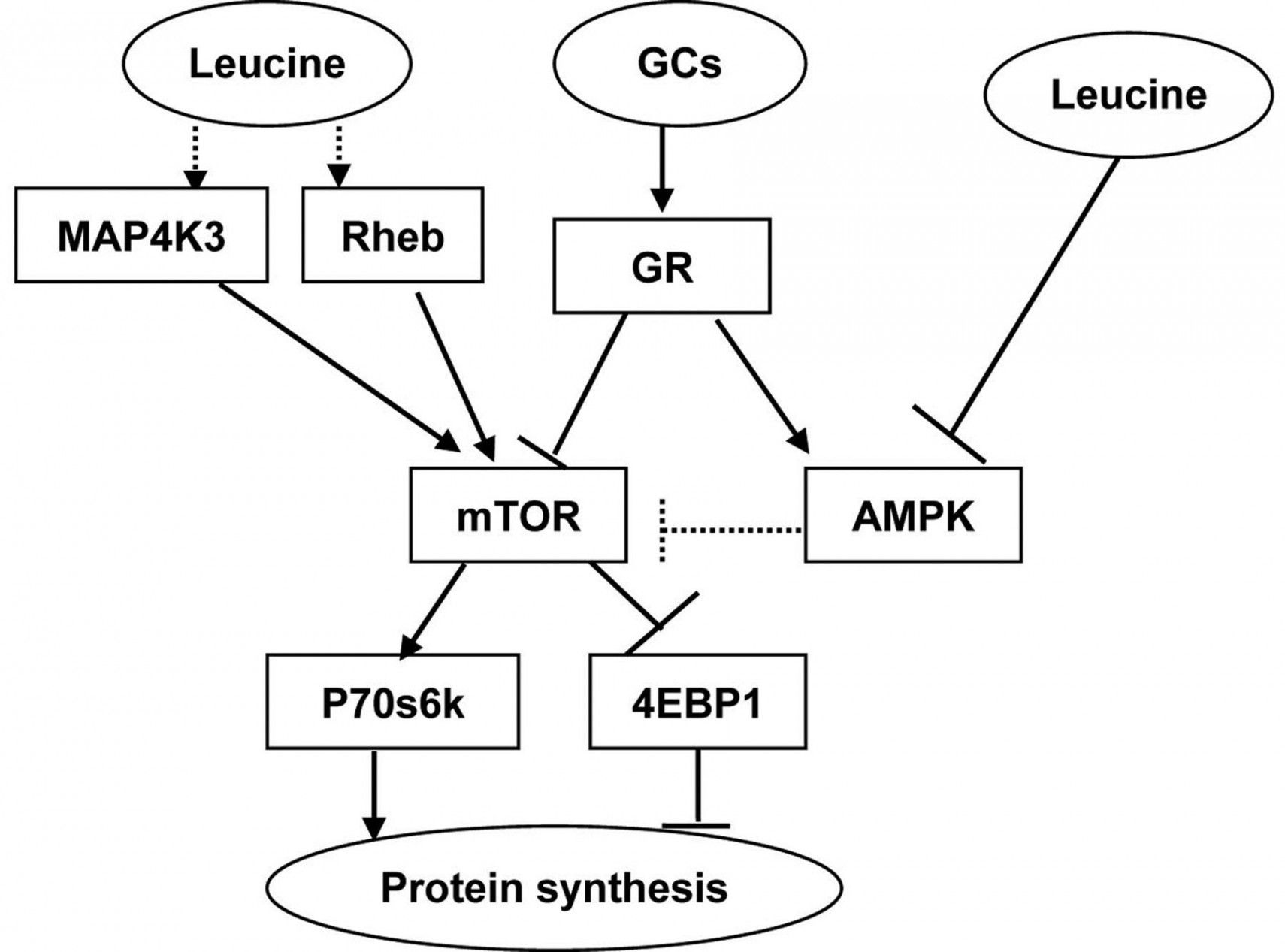 Diagram Of Protein