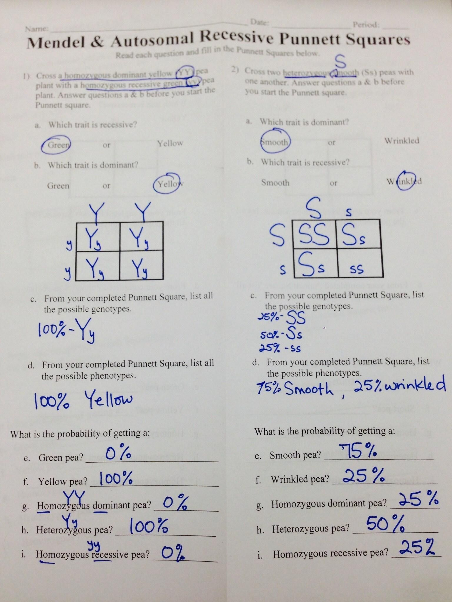 Punnett Square Worksheet 1 Answer Key
