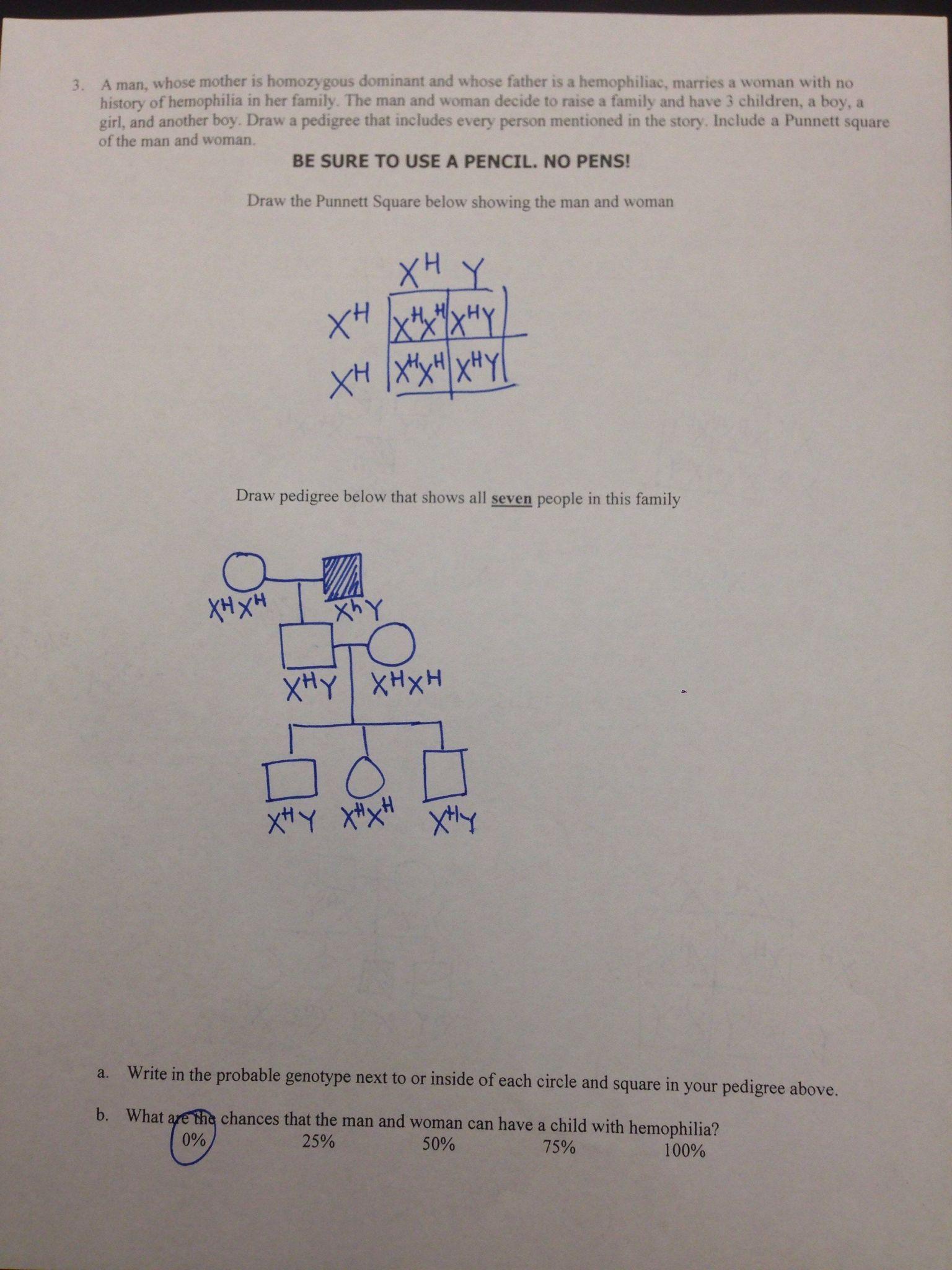 Spongebob Genotype Worksheet Answers