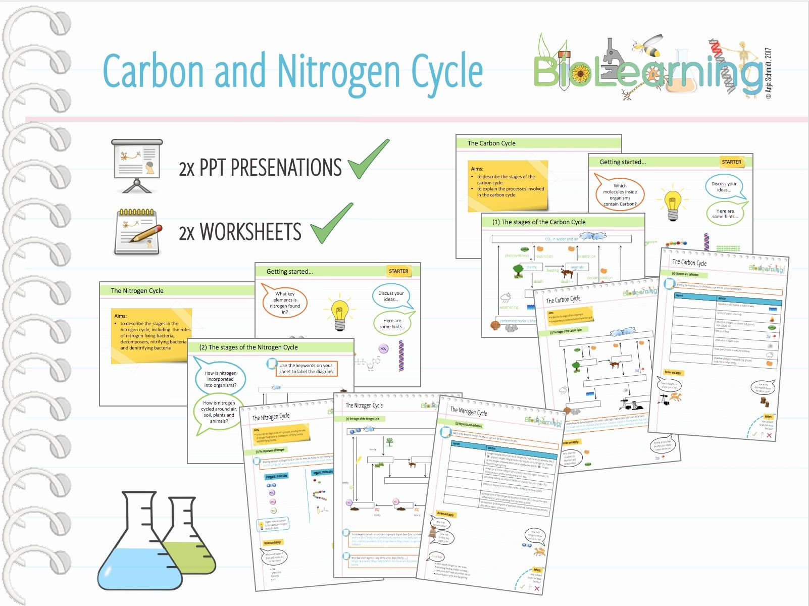 Water Carbon And Nitrogen Cycle Worksheet