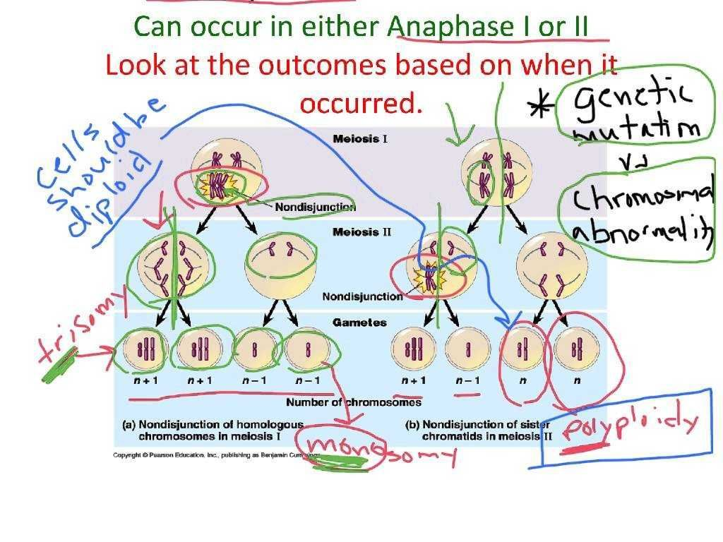 Worksheet 4 4 Chargaff S Dna Data Answer Key