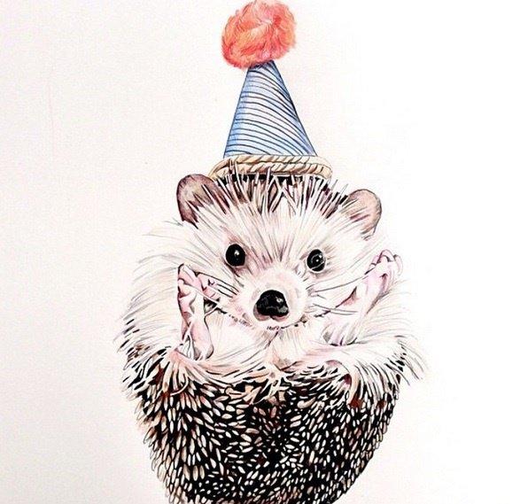 Biddy The Hedgehog Sensation