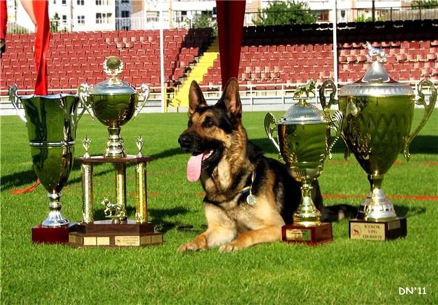 Специалист по дрессировке собак