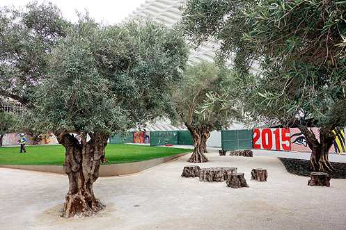 A new park with 100 year old olive trees imported from NorCal sits between The Broad and The Emerson luxury apartments