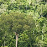 All eyes are on the Amazon – but another forest is on fire too