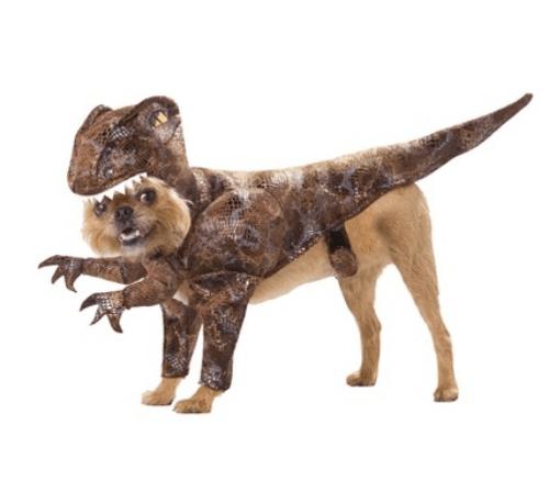 dog raptor
