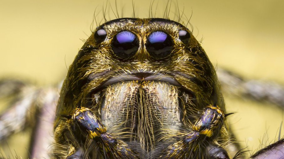 Scared of spiders? You might want to look away