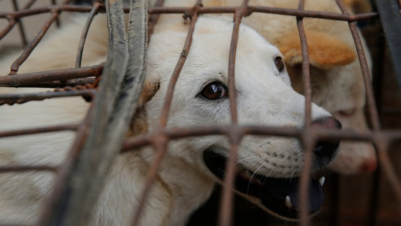 Taiwan first country in Asia to ban consumption and sale of cats and dogs