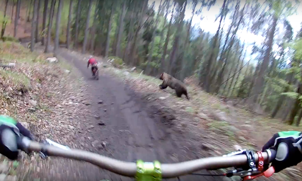 Mountain cyclists attacked by a bear
