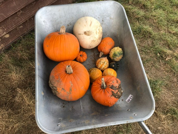 A guide to Pumpkin Patches in Hampshire