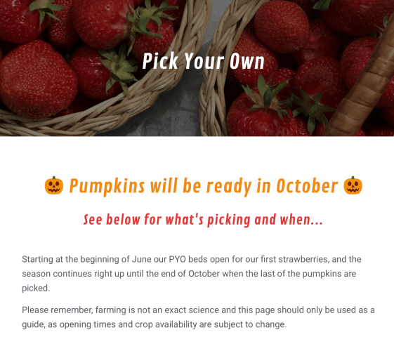 A guide to Pumpkin Picking in Hampshire