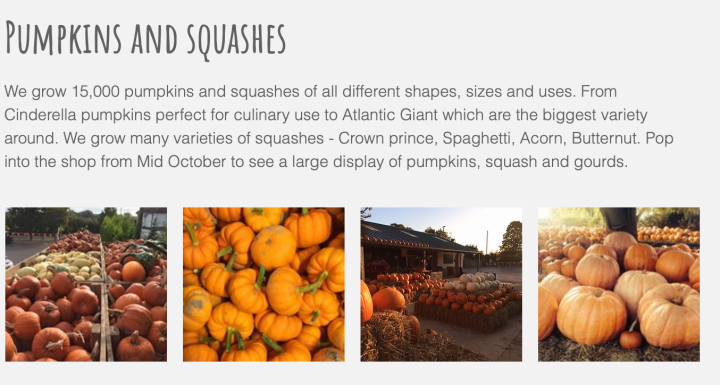 Stoke Fruit Farm - a pumpkin picking experience in Hampshire