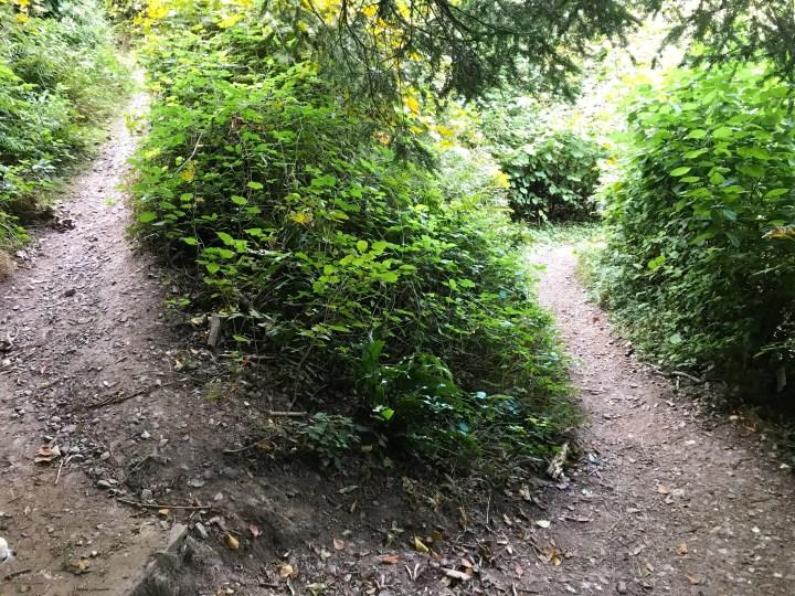 The Zig Zag Path, Selborne in Hampshire