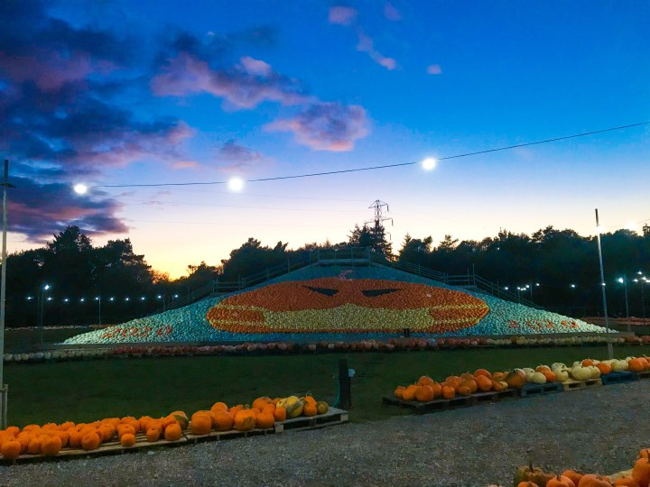 The 2020 pumpkin display at Sunnyfields Farm in Southampton, Hampshire.