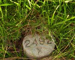 Helen's unmarked grave at Inglewood Park Cemetery has only the lot number. Photo courtesy of Angela Aleiss