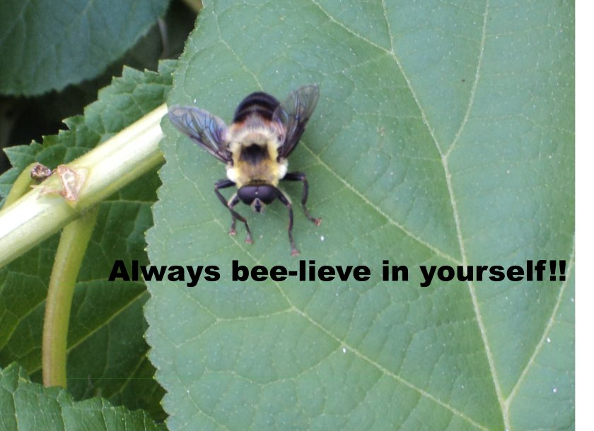 Always Beelieve