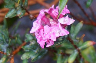 No idea what this pretty little flower is. It appeared last month.