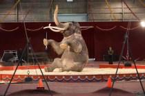 5_Luke The Elephant