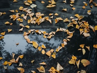 message of falling leaves