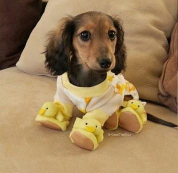 puppyinbooties