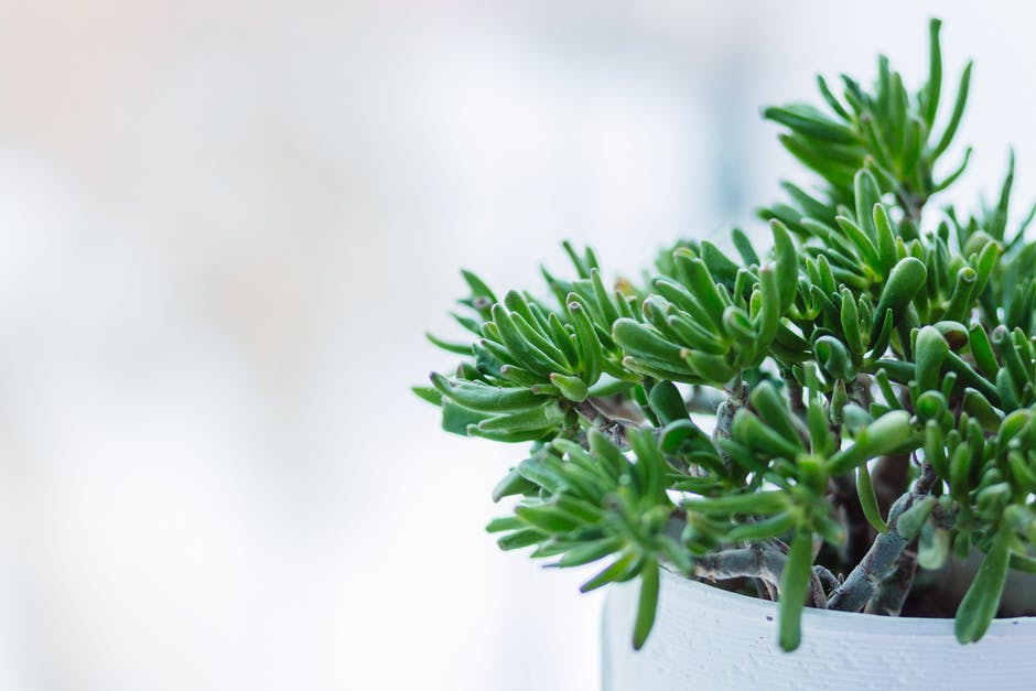 BTY succulent