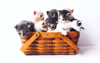 Basket filled with kittens
