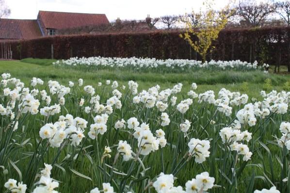 brightwater gardens april blog 6