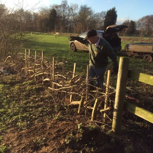 burial-meadow-hedge-laying-2