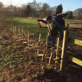 burial-meadow-hedge-laying-2