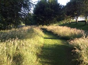 woodland-walk