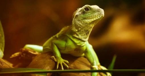 Lizard LLVM 3.8.0
