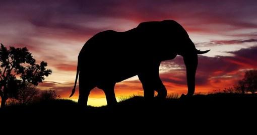 Gradle Elephant Silhouette
