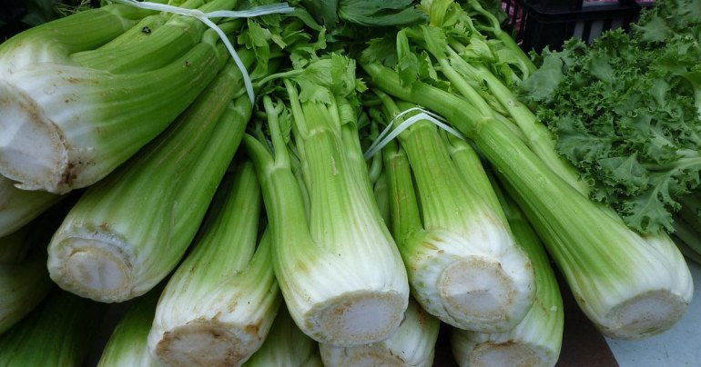 Celery Herb