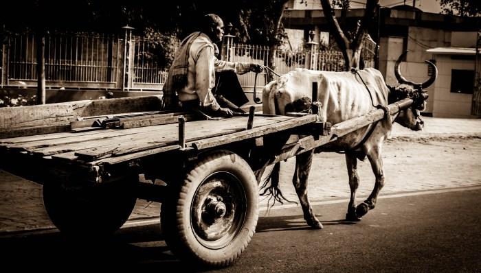 INDIAN STREET PHOTOGRAPHY OF A BULLOCK CART BY BRIJESH KAPOOR