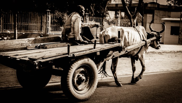 INDIAN STREET PHOTOGRAPHY OF A BULLOCK CART BY BRIJESH KAPOOR