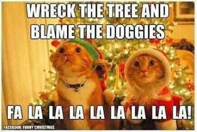 30-funny-animal-christmas-quotes-15-funny-quotes-funny-animals-1