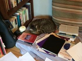 My cat in my writing studio