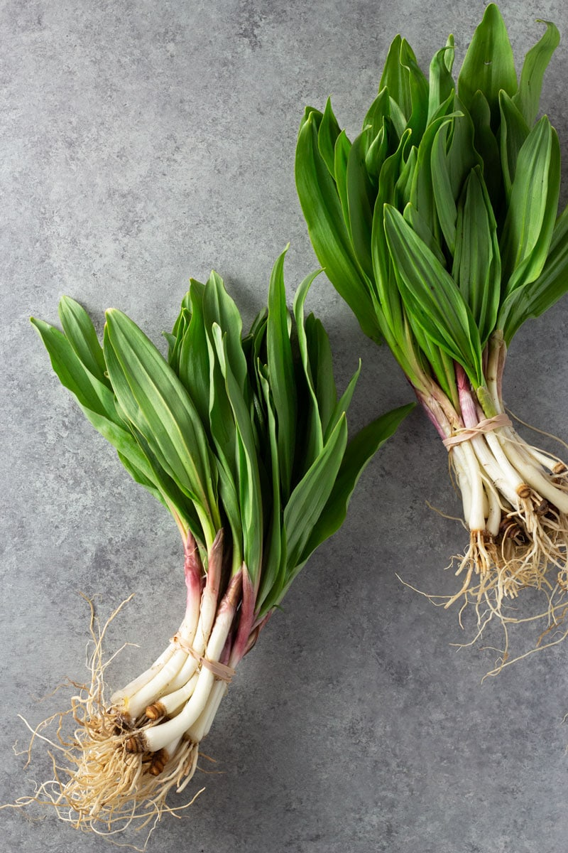 Overhead shot of bunches fresh ramps on a light grey textured surface.