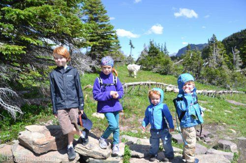 hiking kids with mountain goat, mountain goat