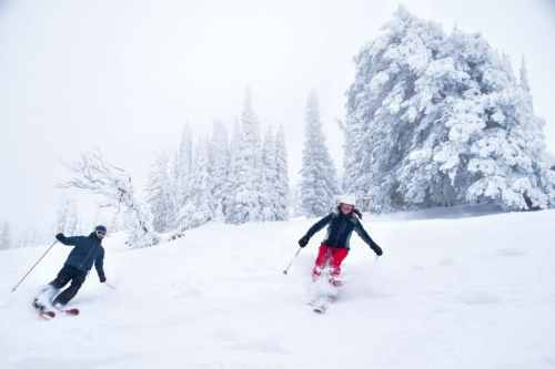 Grand targhee powder