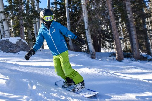 shred dog snowboarding