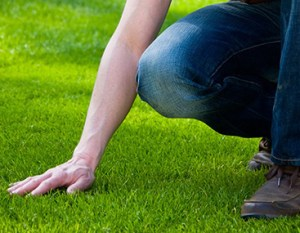 Summertime Lawn Crop 1 300x233 - How Often to Water Your Lawn in Summer? + 12 Tips for Responsible Watering