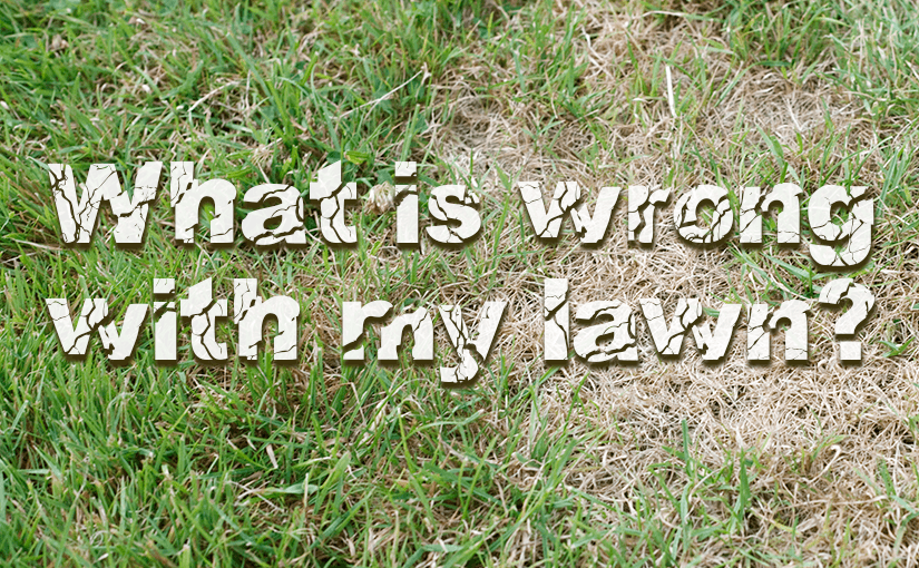 What is wrong with my lawn