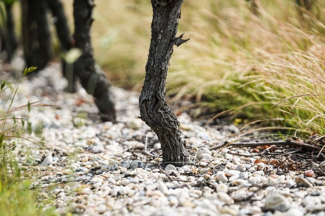 Bordeaux's Maritime Climate means that rain is scattered throughout the year. Good thing they have gravelly soils to keep that water moving along.