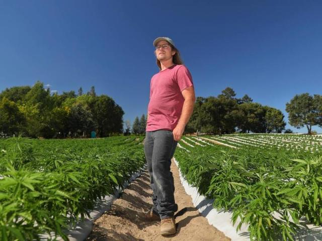 Nick Stromberg is the CEO of Beacon Hemp, which produces varietals of hemp seeds for the farming community. (Christopher Chung/ The Press Democrat