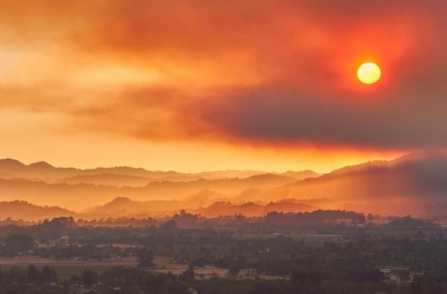 In Sonoma, the Wine Industry Reckons with Wildfires and the Pandemic