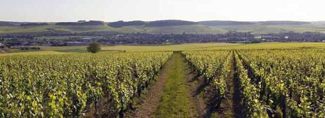© Bourgone.fr | The vineyards of Chablis are one of the few places enjoying climate change.