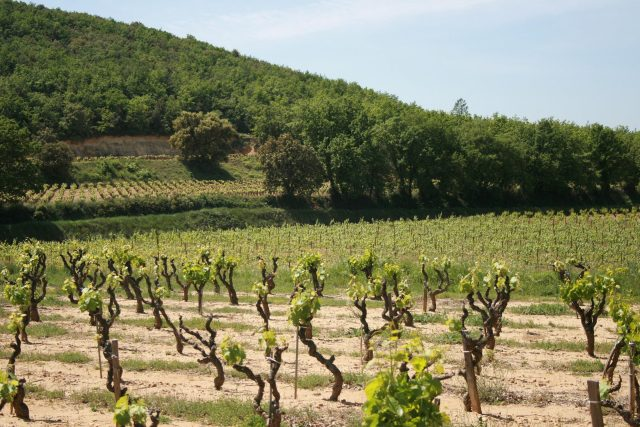 AOC Lirac vineyard in Saint-Geniès-de-Comolas jean-louis zimmermann