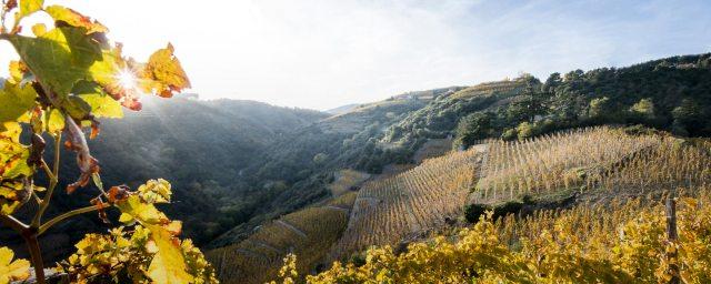 Cornas AOC, Northern Rhone, France; aoc-cornas.fr/EN