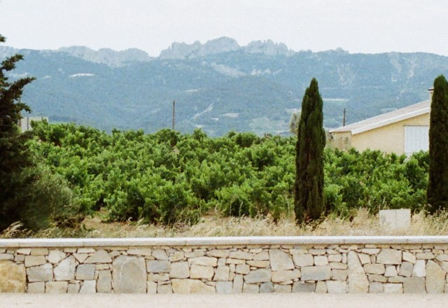 A picture of the Dentelles de Montmirail mountains as seen from Rasteau.